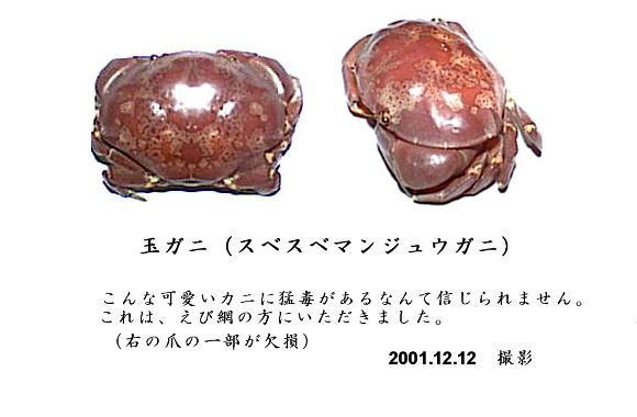 スベスベマンジュウガニの画像 p1_19